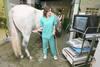 El hospital veterinario supera los 4.500 animales atendidos al año