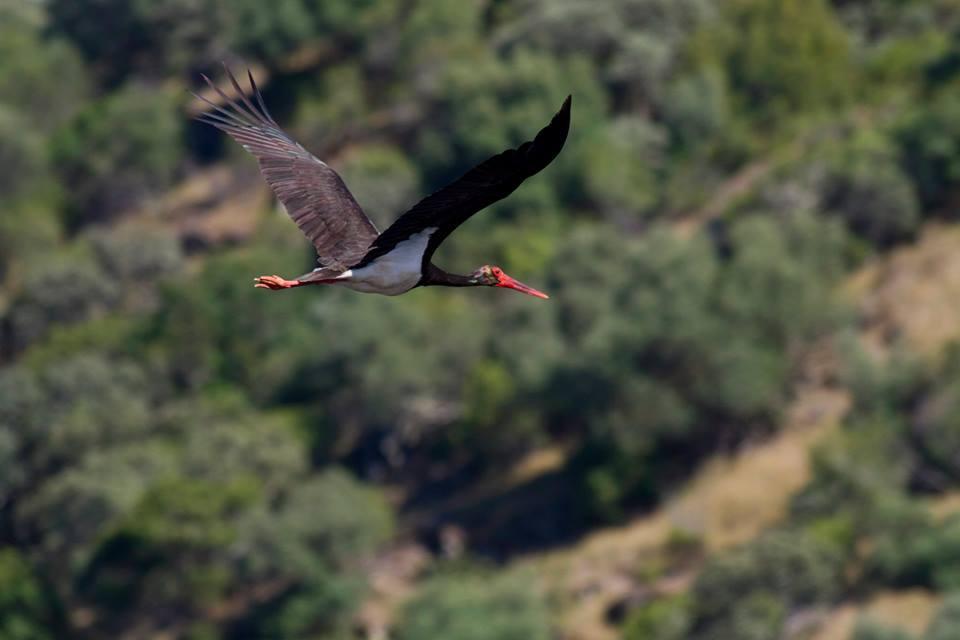Finalistas del II Concurso de Fotografía Parque Natural Tajo Internacional