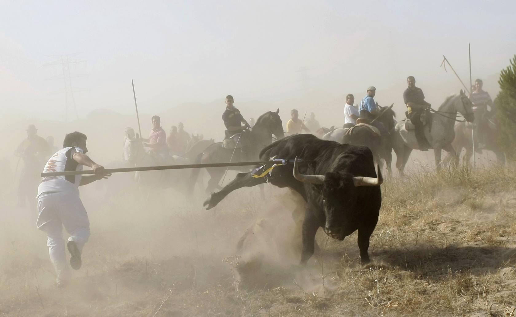 El Toro de la Vega enfrenta un año más a defensores y animalistas